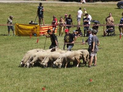 Concurs de gossos d'atura i fira de l'ovella
